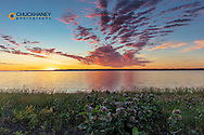 Vivid sunrise clouds over Fort Peck Reservoir and milkweed in the CM Russell National Wildlife Refuge near Fort Peck, Montana, USA