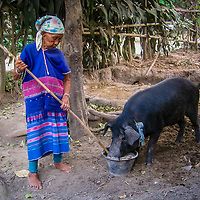 Caring for the Pig by Mida