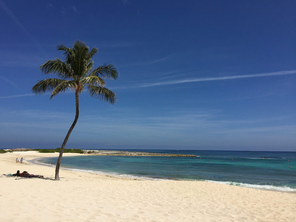 Palm tree on deserted Florida beach