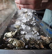 The staff prepares the day's oyster bar Tuesday, March 25, 2014 at Bow & Stern. (Brian Cassella/Chicago Tribune) B583620020Z.1 <br /> ....OUTSIDE TRIBUNE CO.- NO MAGS,  NO SALES, NO INTERNET, NO TV, CHICAGO OUT, NO DIGITAL MANIPULATION...
