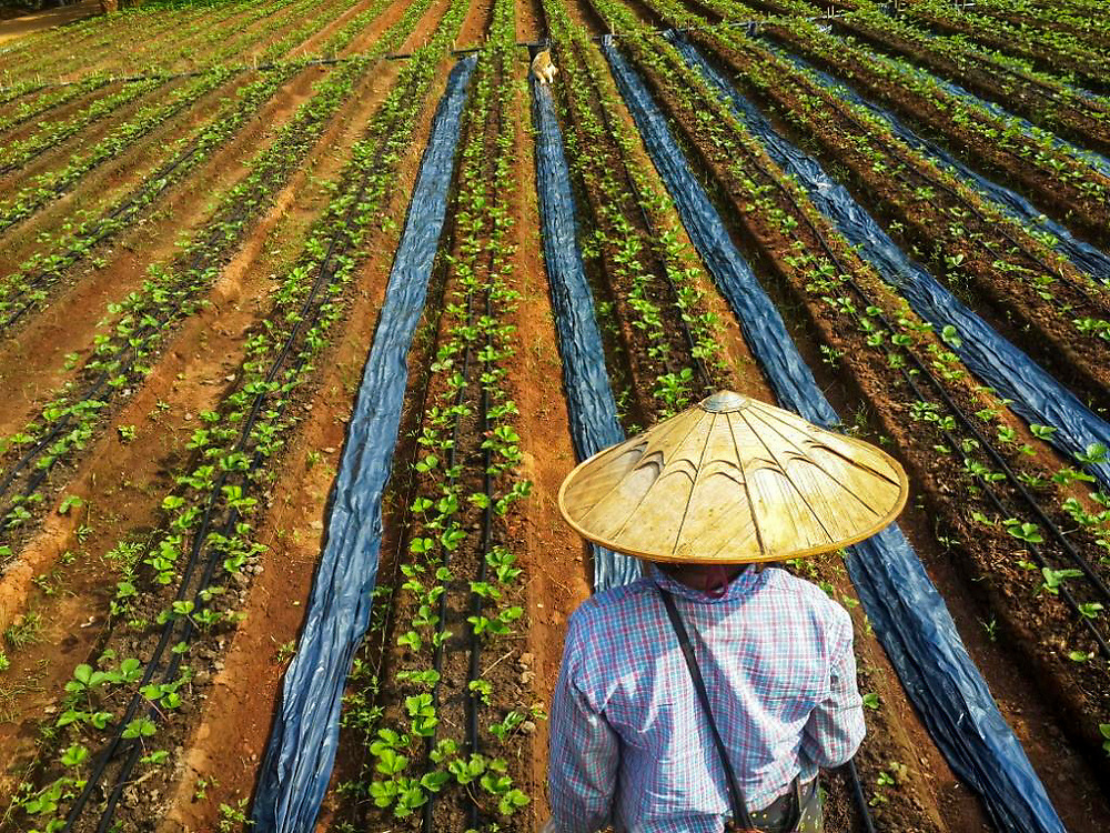 Tending to Crops by Ei Ei Phyo Lwin