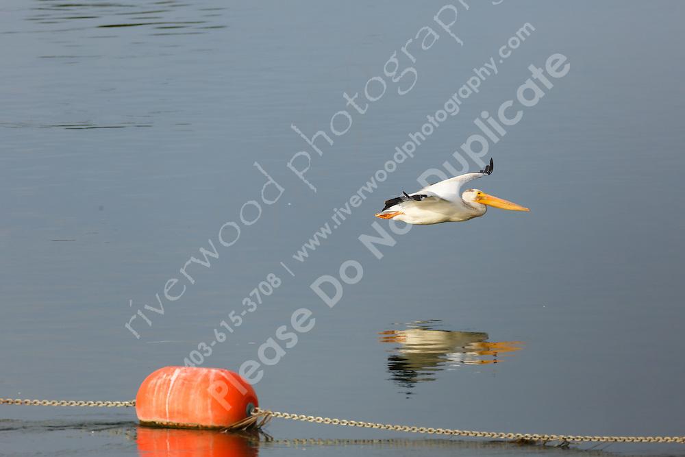 Wyndham Carseland Provincial Park<br /> <br /> ©2015, Sean Phillips<br /> http://www.RiverwoodPhotography.com