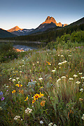Widflowers in Many Glacier.Glacier National Park.