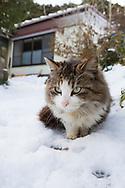 """En katt i på Tashirojima, ön som kallas för """"kattön"""" eftersom här lever hundratals katter tillsammans med ca 50 personer.   <br /> Ishinomaki, Miyagi Prefecture, Japan. <br /> Fotograf: Christina Sjögren<br /> Copyright 2018, All Rights Reserved"""