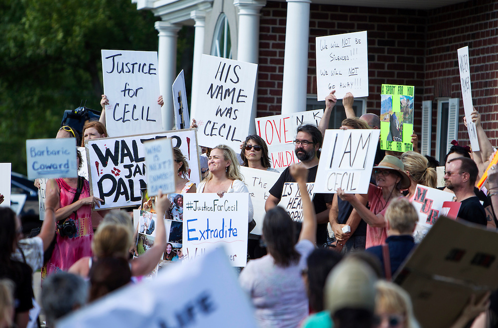 Protestors chanted and posted signs at the dental office of Walter James Palmer in Bloomington, MN, July 29, 2015.  Palmer has been in the global news for hunting and killing Cecil the lion in Zimbabwe.