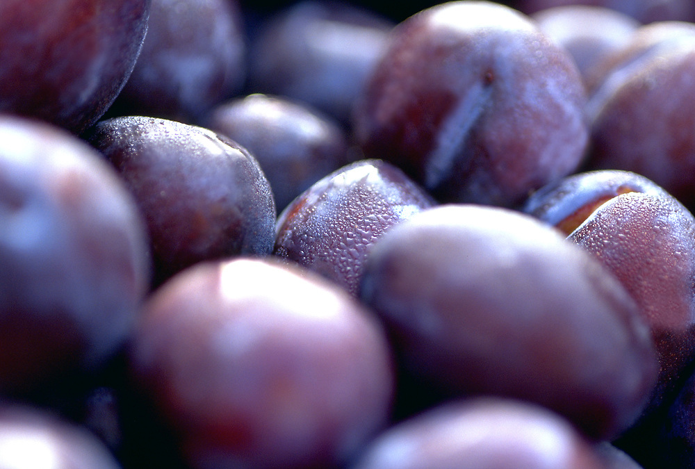 Close up selective focus photograph of a group of President Plums