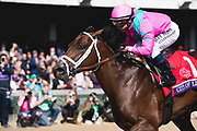 Breeders' Cup Dirt Mile (Race 5) (Dirt) <br /> November 3, 2018: City of Light #1, ridden by Javier Castellano, wins the Breeders' Cup Dirt Mile on Breeders' Cup World Championship Saturday at Churchill Downs on November 3, 2018 in Louisville, Kentucky.