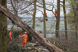 Wendover, UK. 28th April, 2021. Tree surgeons and ecologists working on behalf of HS2 Ltd assist with the felling of trees for the HS2 high-speed rail link in ancient woodland at Jones Hill Wood in the Chilterns AONB. Felling of the woodland which contains resting places and/or breeding sites for pipistrelle, barbastelle, noctule, brown long-eared and natterer's bats has recommenced after a High Court judge yesterday refused campaigner Mark Keir permission to apply for judicial review and lifted an injunction on felling.