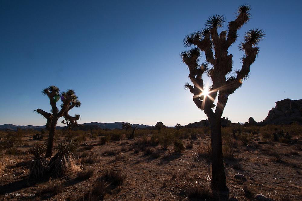 Joshua Tree National Park, California, USA.