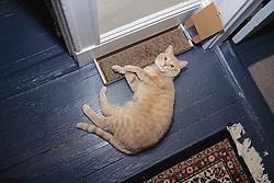 Cat Lying Next To Scratching Board