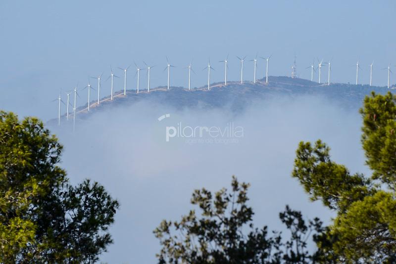 Parque Eólico. Almansa. Albacete ©Antonio Real Hurtado / PILAR REVILLA