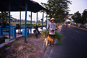 Man carrying sugar leaves on bicycle, Yogyakarta region, Java.