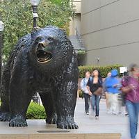Bruin Bear