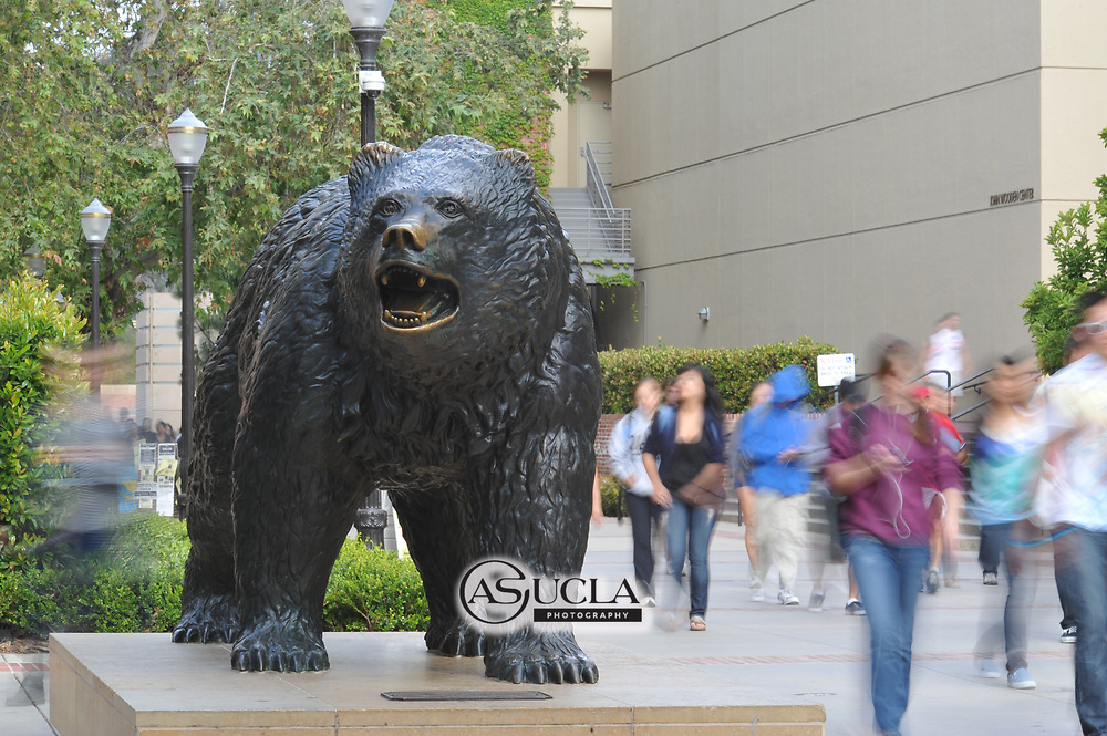 ASUCLA Photography Archive-  Image of the famous Bruin Bear statue in the center of the UCLA Campus, University of California Los Angeles, Westwood, California.<br /> Copyright: ASUCLA