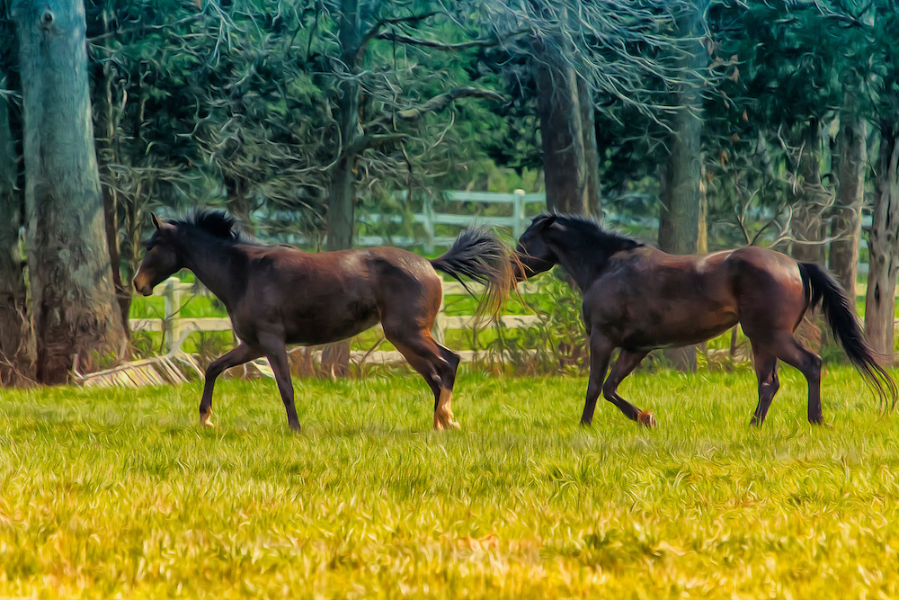 These domestic horses were running around some farm land along HWY D in New Melle, Missouri. They are such beautiful animals.