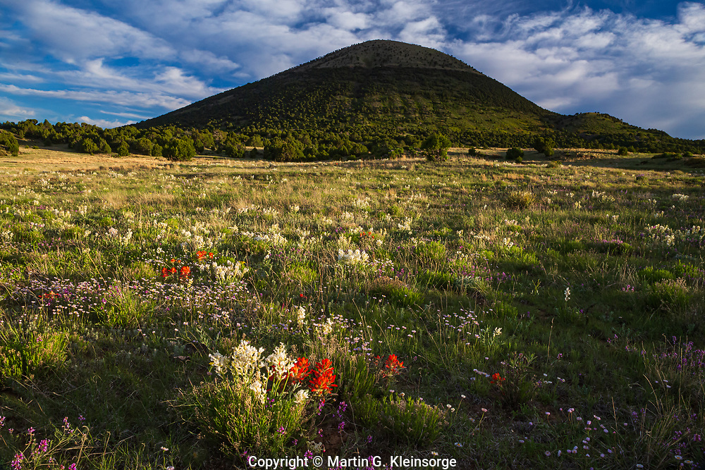 Spring flowers create a colorful scene around 8,182 ft. Capulin Volcano, an unusually well-preserved cinder cone.    Capulin Volcano National Monument, New Mexico.  USA