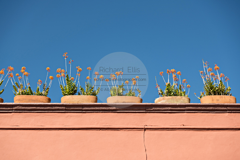 Blooming flowers decorate a roof on a historic colonial style house in San Miguel de Allende, Mexico.