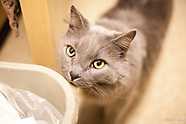 Broken Tail Rescue (Cats)