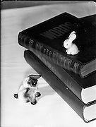 Irish Photo Archive wishes alls Bookworms a great Bealtaine Festival. Enjoy the Festival as this little Dog and Rabbit did before.