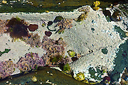 Rock pool, white lichens, seaweed, limpets and sea anemones, Kilkee, County Clare, West Coast of Ireland
