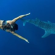 Whale shark (Rhincodon typus) with Spanish tourist, Honda Bay, Palawan, the Philppines.