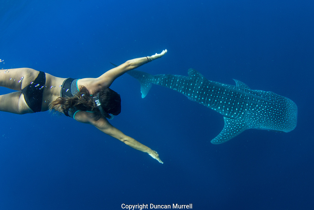 Whale shark (Rhincodon typus) with Spanish tourist, Honda Bay, Palawan, the Philppines.