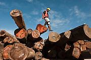 Reduced impact logging<br /> Iwokrama<br /> Rupununi<br /> Guyana<br /> South America