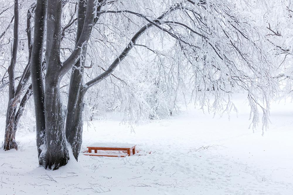 Sinite Kamani park in Winter