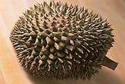 Photograph of a large Durian Fruit