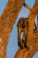 Botswana-Wildlife-Misc. Animals