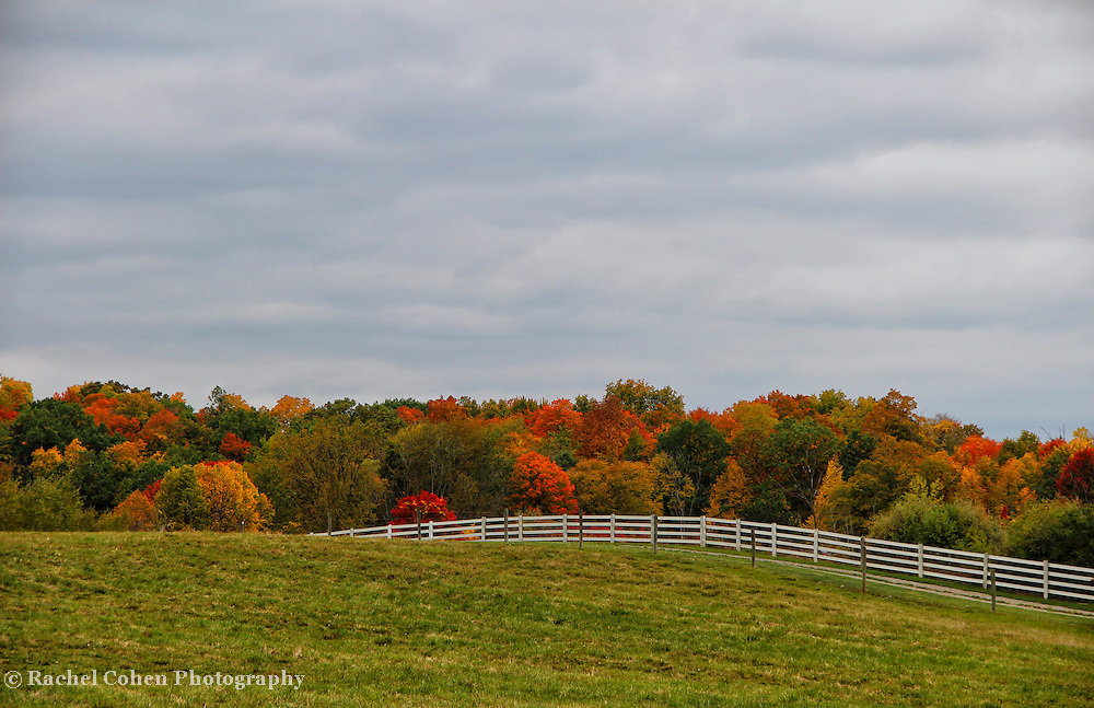 """""""Painting October""""<br /> <br /> The wonders of a fence lined rural farm field in autumn! The splendor of fall foliage gracing the landscape with its magnificent color!!<br /> <br /> Autumn Landscapes by Rachel Cohen"""