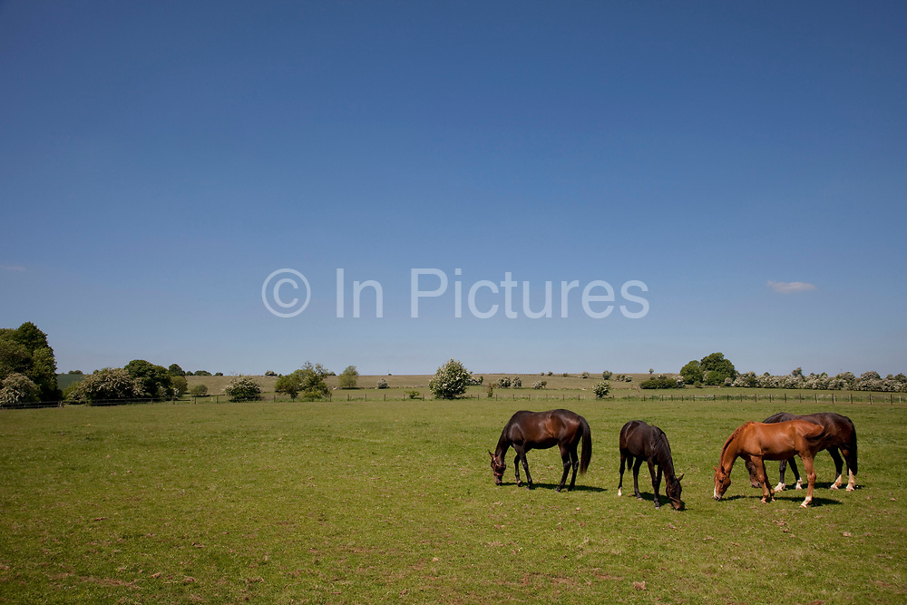Horses graze in a field near to Stanton in The Cotswolds, Gloucestershire, UK.  Popular with both the English themselves and international visitors from all over the world, the area is well known for gentle hillsides 'wolds', outstanding countryside, sleepy ancient limestone villages, historic market towns and for being so 'typically English' where time has stood still for over 300 years. Throughout the Cotswolds stone features in buildings and stone walls act as a common thread in seamlessly blending the historic towns & villages with their surrounding landscape. One of the most 'quintessentially English' and unspoiled regions of England.