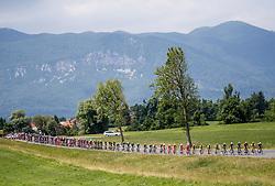 Peloton near Razdrto during Stage 1 of 24th Tour of Slovenia 2017 / Tour de Slovenie from Koper to Kocevje (159,4 km) cycling race on June 15, 2017 in Slovenia. Photo by Vid Ponikvar / Sportida