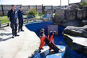 Discovery Channel wildlife rescue. Seal release at Scarborough Sea Life Centre
