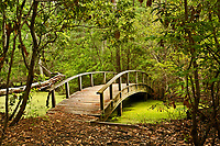 NC01289-00...NORTH CAROLINA - Arched bridge over a marsh on the Center Traill through a  maritime forest at Nags Head Woods Preserve on the Outer Banks at Nags Head.