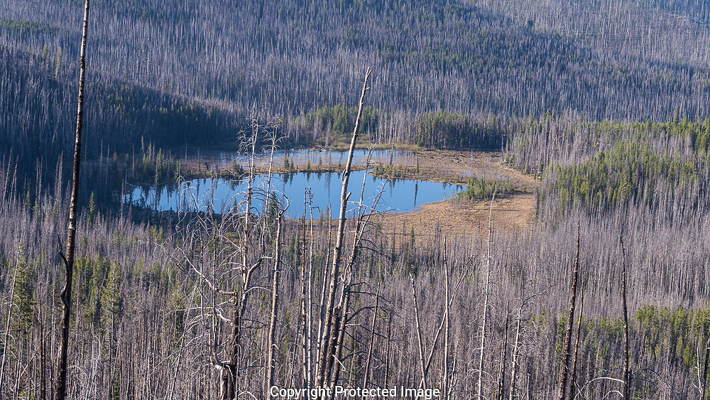 Roger Lake in the Okanogan National Forest. The area burned a decade ago and a new growth of pines, firs, and spruce are coming up throughout the forest. May 25th.
