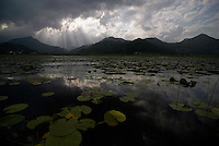 Lake Skadar Landscape near Virpazar, Lake Skadar National Park, Montenegro