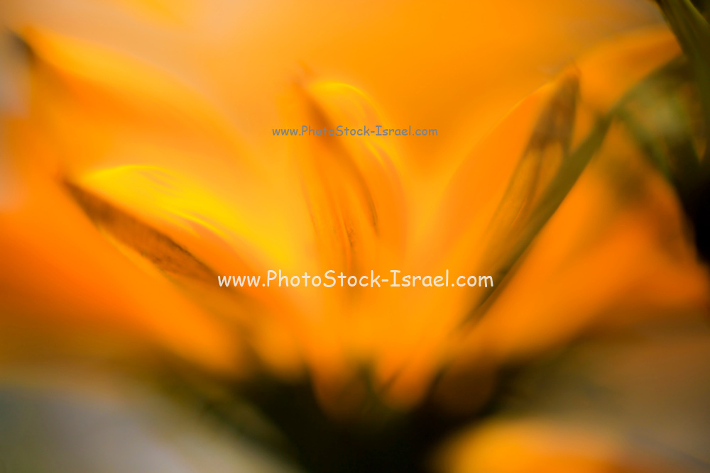 Extreme close up of a yellow daisy with a blue sky background