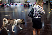 Woman wearing a shirt with dogs at the World Dog exhibition on the Leipzig Trade Fair. Over 31,000 dogs from 73 nations will come together from 8-12 November 2017 in Leipzig for the biggest dog show in the world.
