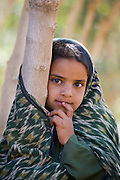 A girl leans on a qat tree in a qat orchard near the city of Sanaa, Yemen. Although qat chewing isn't as severe a health hazard as smoking tobacco, it has drastic social, economic, and environmental consequences. When chewed, the leaves release a mild stimulant related to amphetamines. Qat is chewed several times a week by a large percentage of the population: 90 percent of Yemen's men and 25 percent of its women. Because growing qat is 10 to 20 times more profitable than other crops, scarce groundwater is being depleted to irrigate it, to the detriment of food crops and agricultural exports.