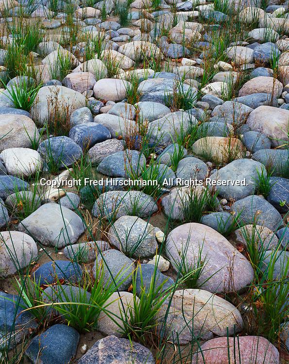 Sedges growing among boulders along the shore of Lake Huron at Negwegon State Park, Michigan.