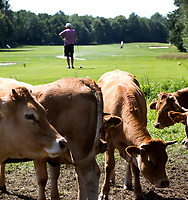 HENGELO (GLD) - wachten.  golfbaan 't Zelle . COPYRIGHT KOEN SUYK