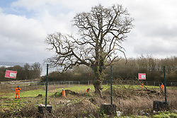 Harefield, UK. 18 February, 2020. HS2 security workers stand around a large tree as it is surveyed at a site which has been fenced off in the Colne Valley for the HS2 high-speed rail link.