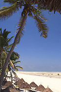 Thatched beach umbrellas on the beach at Paje, Zanzibar, Tanzania
