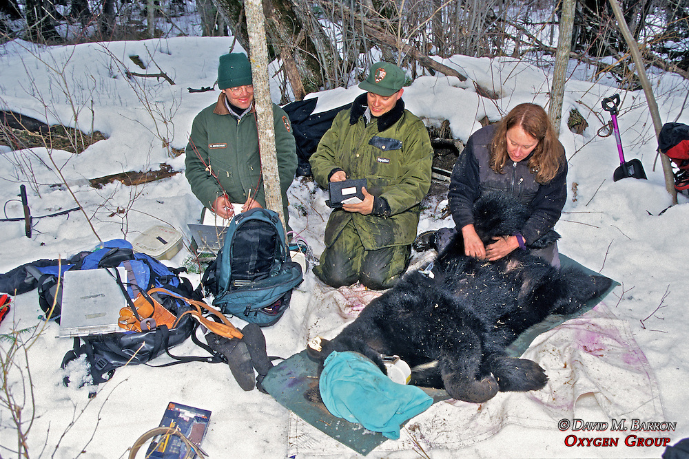 Working Up Bear