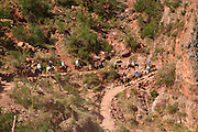 Mules on the Bright Angel Trail, Grand Canyon National Park, Arizona.