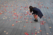 Asian girl picking up red autumn leaves fall on a man made surface. London, UK.