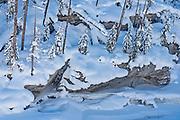 Rocks and trees in snow, Kootenay National Park, British Columbia, Canada