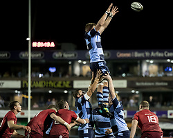 Macauley Cook of Cardiff Blues claims the lineout<br /> <br /> Photographer Simon King/Replay Images<br /> <br /> Guinness PRO14 Round 4 - Cardiff Blues v Munster - Friday 21st September 2018 - Cardiff Arms Park - Cardiff<br /> <br /> World Copyright © Replay Images . All rights reserved. info@replayimages.co.uk - http://replayimages.co.uk