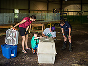 26 JUNE 2019 - CENTRAL CITY, IOWA: Poultry check in at the Linn County Fair. Summer is county fair season in Iowa. Most of Iowa's 99 counties host their county fairs before the Iowa State Fair, August 8-18 this year. The Linn County Fair runs June 26 - 30. The first county fair in Linn County was in 1855. The fair provides opportunities for 4-H members, FFA members and the youth of Linn County to showcase their accomplishments and talents and provide activities, entertainment and learning opportunities to the diverse citizens of Linn County and guests.       <br /> PHOTO BY JACK KURTZ